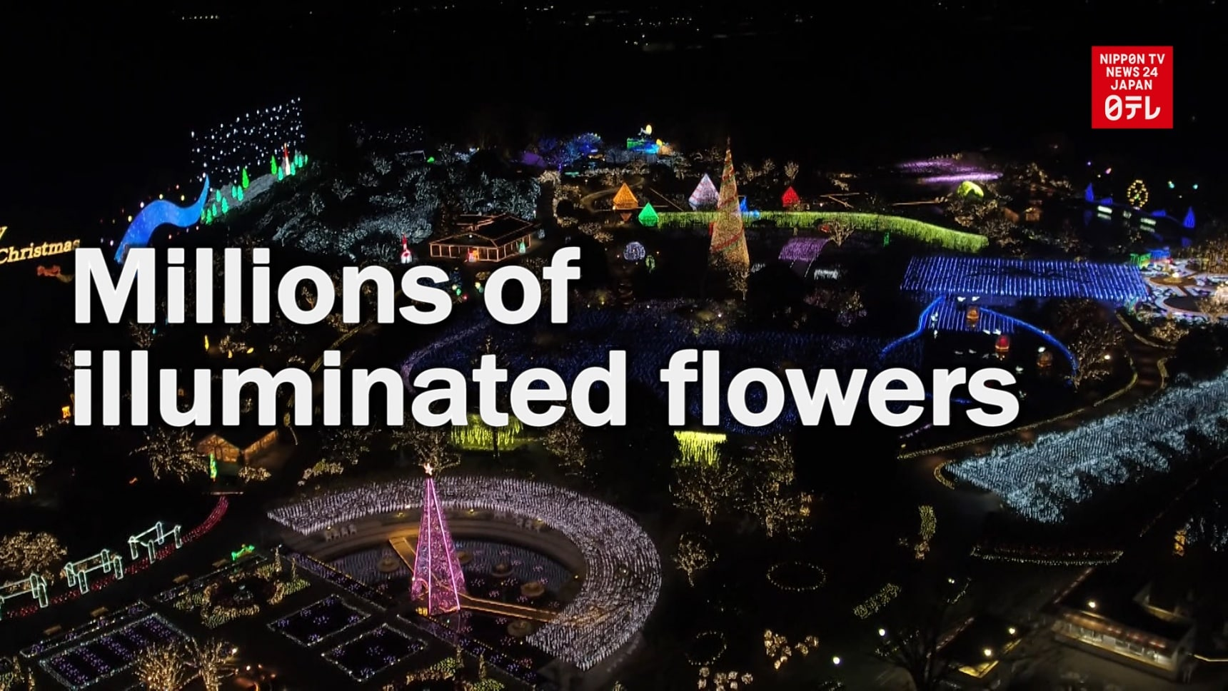 Ashikaga Flower Park Shines in Winter