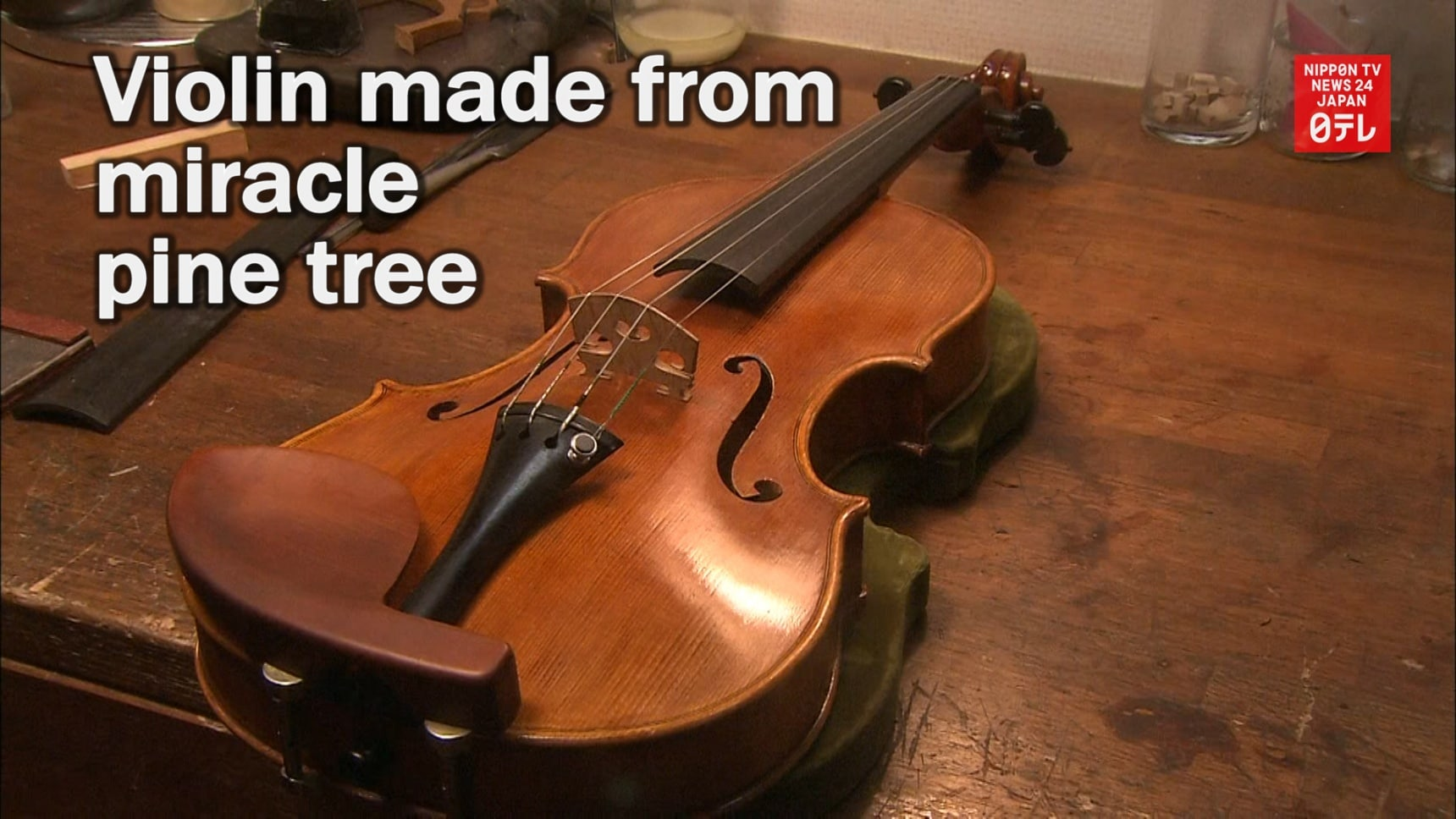 Violin Made from Iwate's 'Miracle Pine Tree'