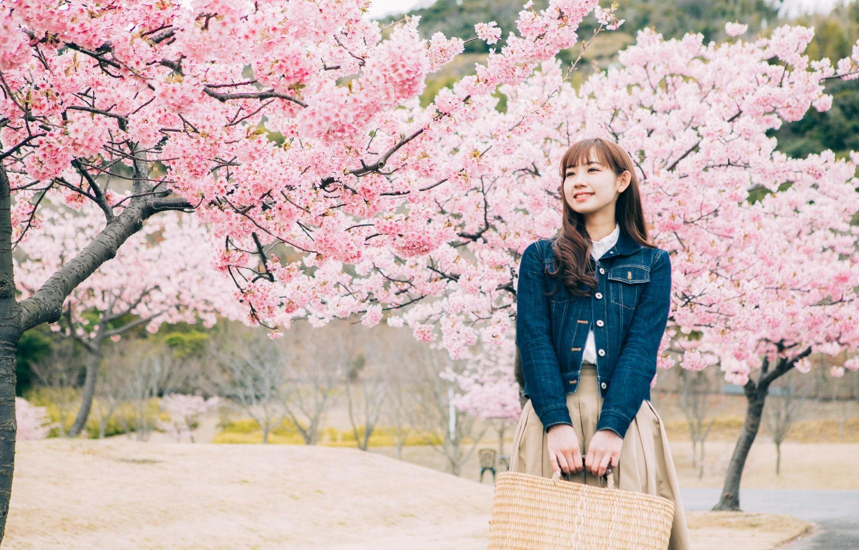 """深度日本:震惊!曾经梅花才是赏花圈C位?""""花见""""习俗与樱花上位的那些秘密......"""