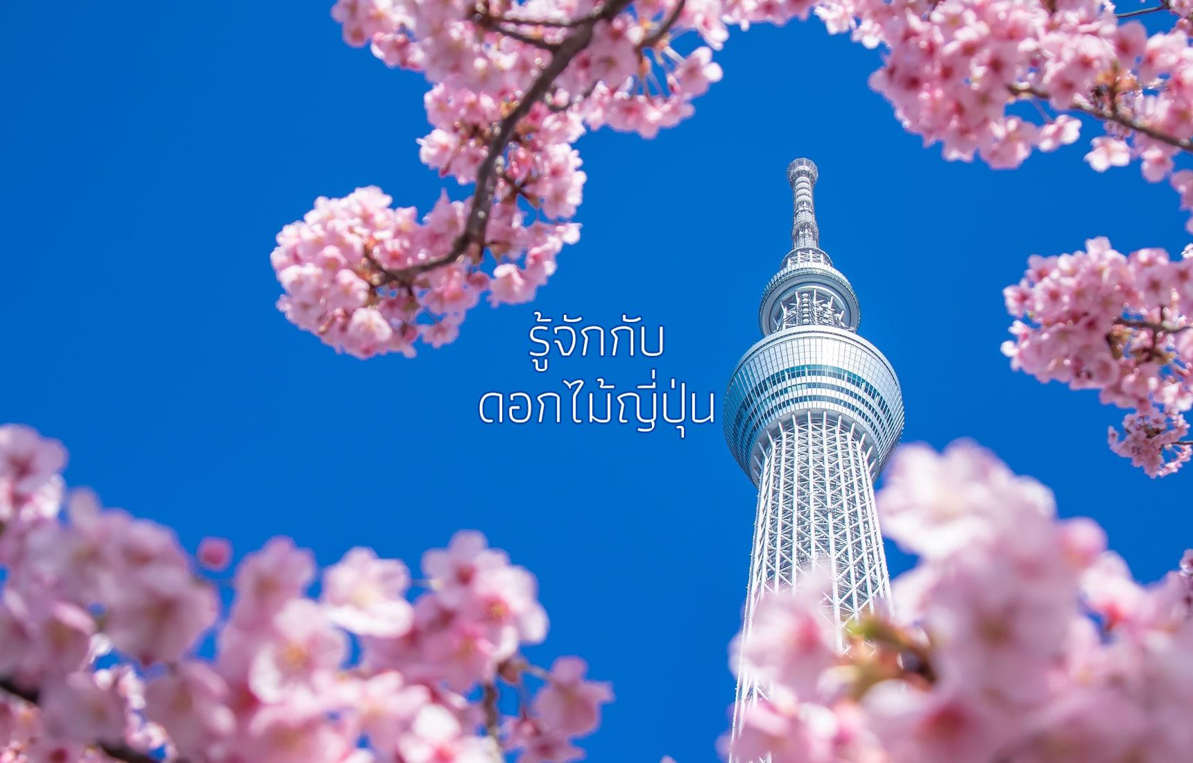 รู้จักกับดอกไม้ญี่ปุ่น