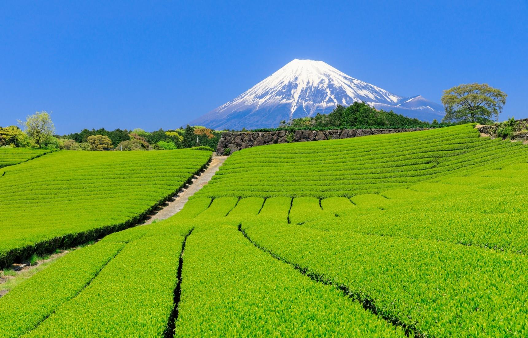 【日本雜學】和氣的靜岡人卻掌握新商品的生殺大權?