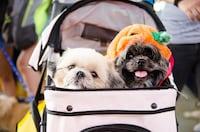 散歩がぐっと楽に!犬用バギー・ペットカートの選び方とおすすめ5選 - PICUP(ピカップ)