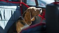 犬用車シートおすすめ人気ランキング11選|助手席と後部座席タイプ - Best One(ベストワン)