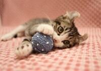 猫が喜ぶ遊び方ってどんなもの?