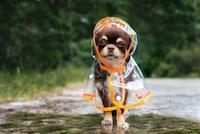 犬用レインコートのおすすめ人気ランキング11選|雨の日のお散歩に濡れないように!