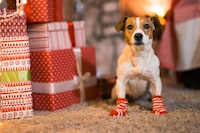 犬用靴・靴下おすすめ15選|脱げないようサイズの確認を!滑り止めも大切