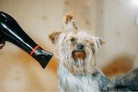 犬用ドライヤーおすすめ人気ランキング8選 低温×風量の大きいものが◎ - Best One(ベストワン)