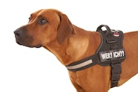 老犬の介護用ハーネスおすすめ5選【ペティオなど】|散歩に便利!前足、後ろ足用も