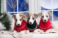 犬用冬服おすすめ人気ランキング20選|おしゃれなつなぎや暖かいコートも - Best One(ベストワン)