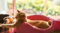 猫用ベッドおすすめ人気4選と選び方|夏用・冬用など季節に合わせて!おしゃれでかわいいドーム型など - Best One(ベストワン)