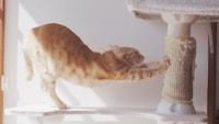 猫用爪とぎグッズおすすめ14選 人気素材はダンボールや麻!おしゃれでかわいい商品も - Best One(ベストワン)