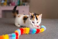 猫用おもちゃのおすすめ人気商品20選|安全なものの選び方も!自動のアイテムやボールで運動不足解消 - Best One(ベストワン)