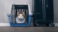 獣医師おすすめ!猫のキャリーバッグの選び方・嫌がる時の対処法 - Best One(ベストワン)