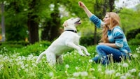 獣医師監修!犬の噛み癖・引っ張り癖等のしつけの方法と役立つグッズ - Best One(ベストワン)