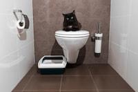 猫用トイレシートのおすすめランキング12選|臭わないタイプに注目!シートのみの使い方や交換頻度も紹介 - Best One(ベストワン)