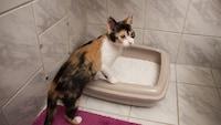 猫用システムトイレ&グッズおすすめ人気商品15選 砂とシートで臭いを抑える!おしゃれな製品も - Best One(ベストワン)