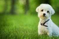 子犬の首輪おすすめ人気ランキング12選|初めての首輪はサイズ調節しやすいものが◎ - Best One(ベストワン)