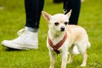 犬用ハーネスおすすめ人気ランキング13選|抜けにくく負担にならないものを 介護用ハーネスも - Best One(ベストワン)