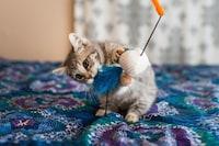 子猫用おもちゃのおすすめランキング12選 歯固めや一人遊びできるものも - Best One(ベストワン)