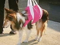 老犬・高齢犬のための介護用品 [犬] All About