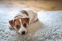 犬用ホットカーペットおすすめランキング11選|温かい温度をキープしてくれる冬の必需品! - Best One(ベストワン)