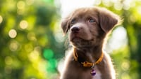 犬用首輪おすすめ人気ランキング14選 革製のおしゃれでかわいい商品から名前入れできるものも! - Best One(ベストワン)