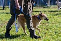 犬用ハーフチョークのおすすめランキング12選 小型犬から大型犬のものまで!使い方も併せて紹介 - Best One(ベストワン)