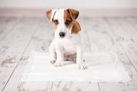 犬のトイレしつけスプレーおすすめ人気10選|誘導タイプやマーキング防止タイプも! - Best One(ベストワン)