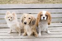 クリッカートレーニング!犬のしつけ方法・クリッカーの使い方 [犬] All About