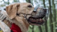 犬用口輪おすすめ人気ランキング10選|可愛いアヒル口タイプが人気!付け方や効果もチェック - Best One(ベストワン)