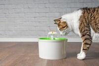 猫用自動給水器おすすめ人気ランキング23選|お手入れ簡単なものや温水タイプも紹介! - Best One(ベストワン)