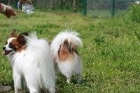 実は隠れ水不足!?体重別、愛犬に必要な水の量 -AllAbout(オールアバウト)