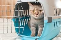 猫用キャリーバッグおすすめ25選 おしゃれなリュックも人気!折りたたみ式や獣医師推薦アイテムも紹介 - Best One(ベストワン)