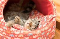 おしゃれな猫用ハウス・ベッドおすすめ16選 夏と冬の季節に合わせて!かわいいドーム型も紹介 - Best One(ベストワン)