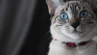 おしゃれな猫の首輪おすすめ15選 手作りやかわいい鈴付きも!安全でストレスフリーな商品を紹介 - Best One(ベストワン)