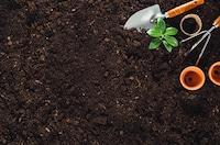 培養土のおすすめ人気ランキング8選|育てたい植物に適したものを! - Best One(ベストワン)