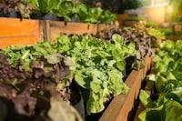 家庭菜園プランターのおすすめ人気ランキング9選|深さと土の入る容量をチェック! - Best One(ベストワン)