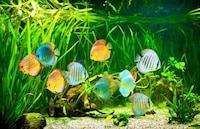 水槽用砂利・底砂のおすすめ人気ランキング10選|レイアウトを楽しもう!黒は魚の色づきに◎ - Best One(ベストワン)