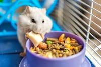 【2021】ハムスターの餌おすすめランキング22選 食べない理由や適量・頻度は?主食とおやつを紹介! - Best One(ベストワン)