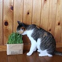 猫草についてはコチラをcheck!