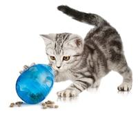 子猫の餌の選び方とおすすめ商品はコチラをcheck!