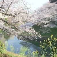 東京・穴場のお花見コース
