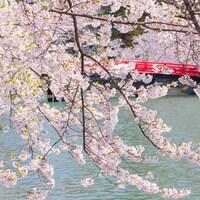 日本国内103ヶ所の桜名所を一挙紹介
