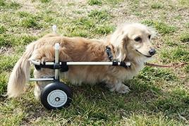 小型犬用2輪歩行器 車いす