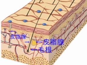 「フェイササイズ」でたるみによる毛穴の広がりを予防