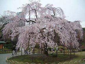 8位:小石川後楽園