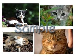 壁紙にも使える猫のフリー画像がたくさん!