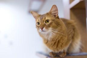 猫が快適な部屋、4つのポイント