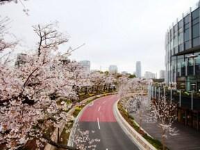 東京ミッドタウンでロマンチック桜ランチ