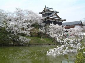 城と桜の組み合わせが美しい【郡山城跡】